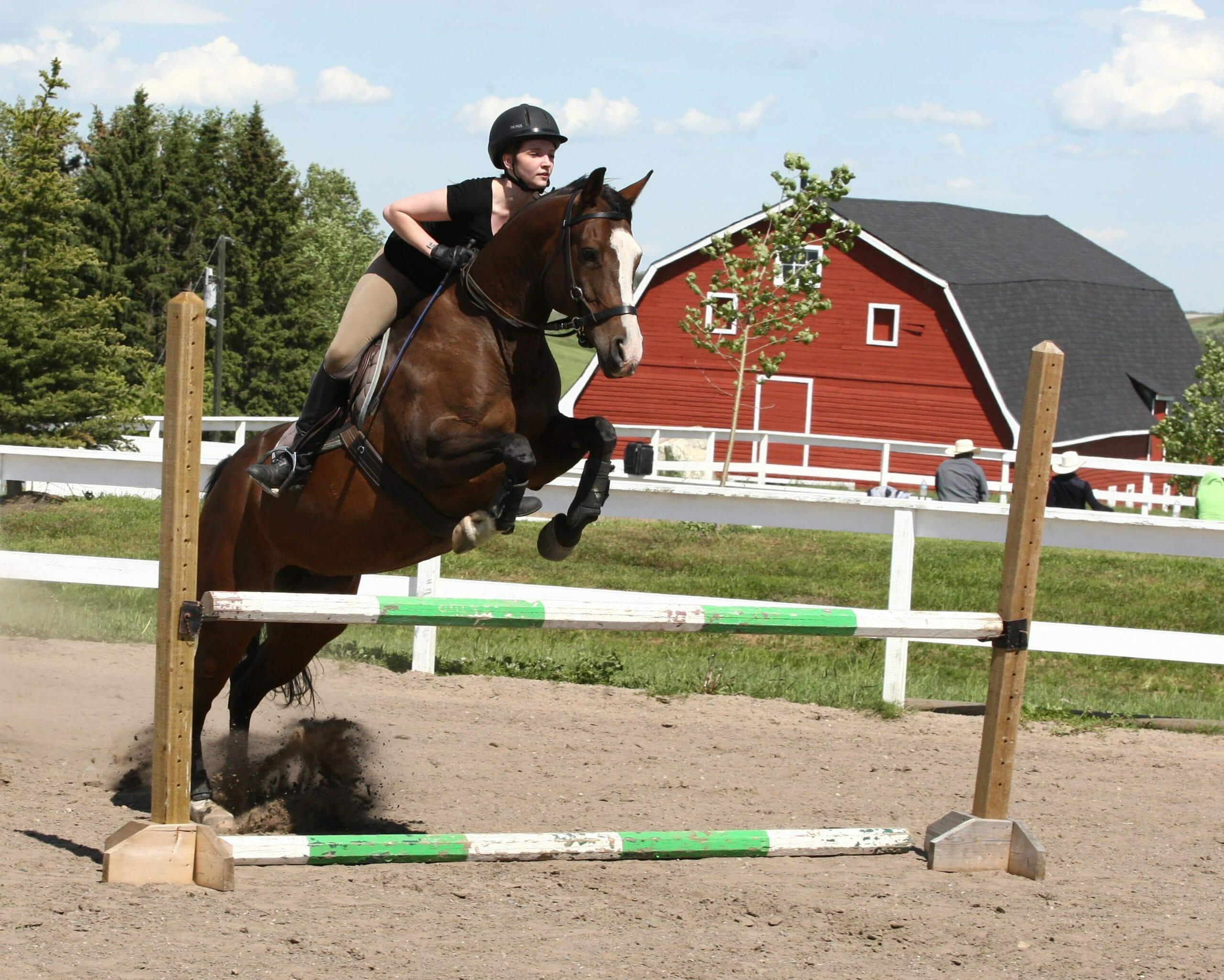 alberta horse training