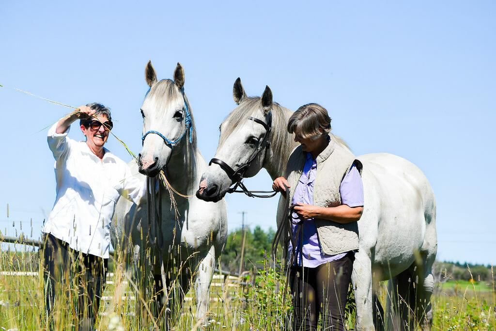 reverence stables horsemanship centre