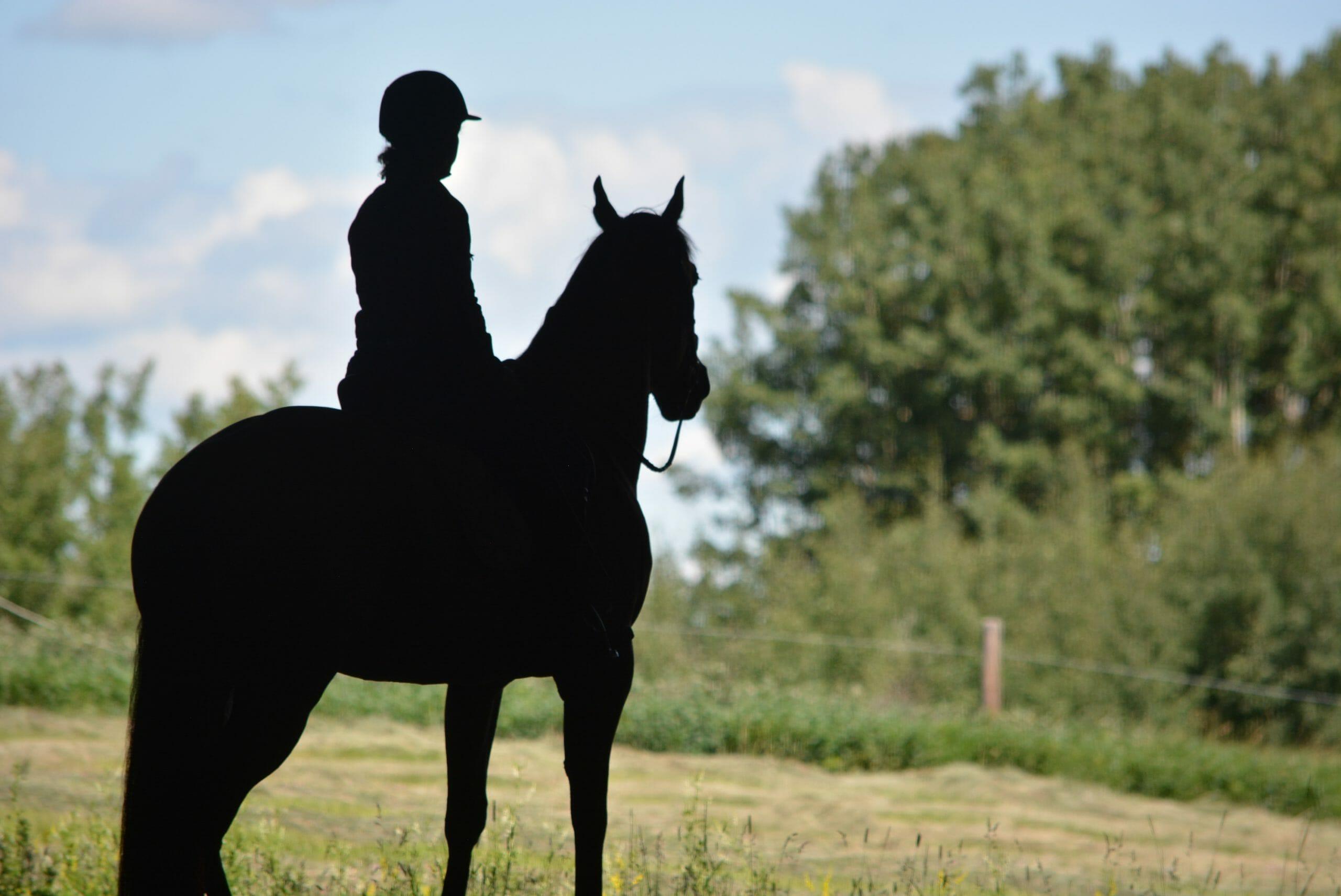 homeschool your horse