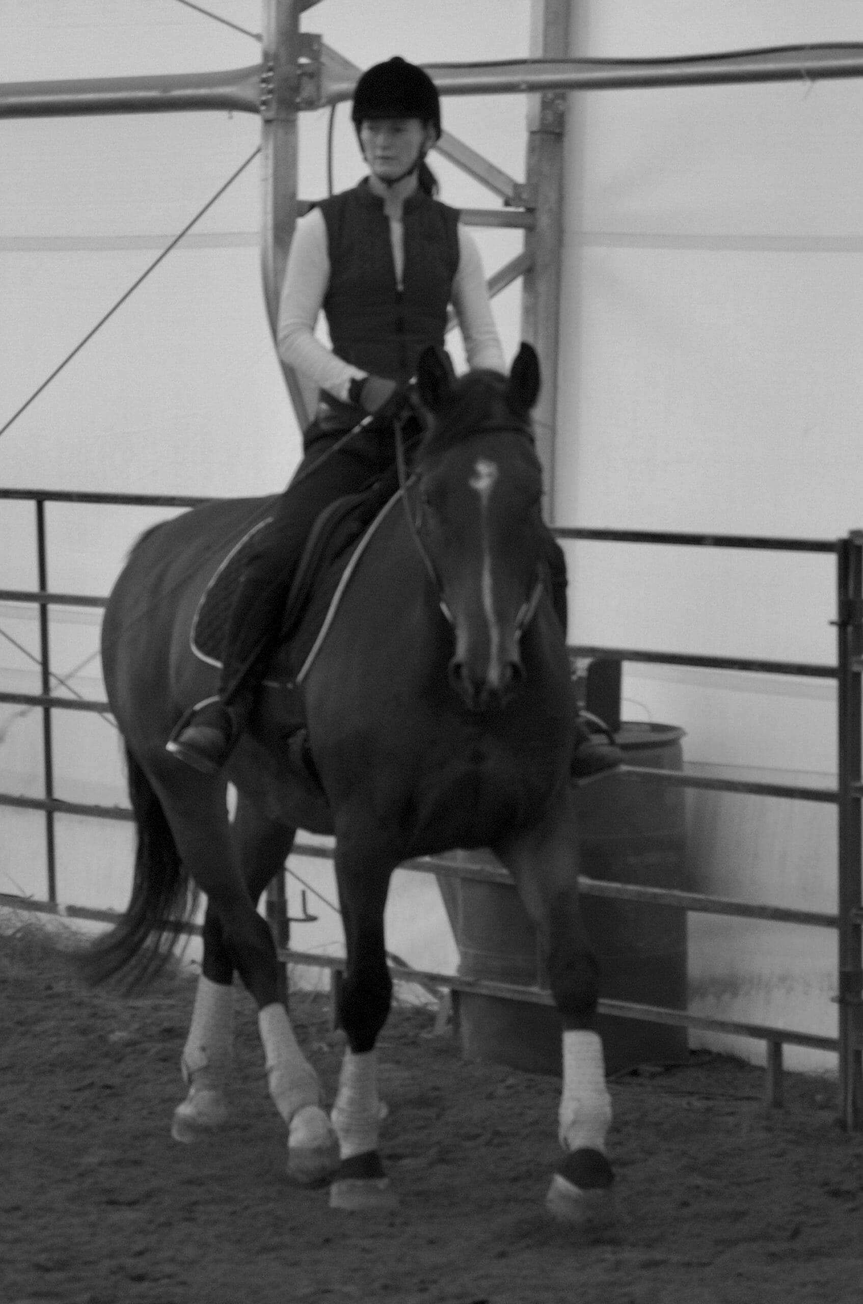 guest horse training alberta