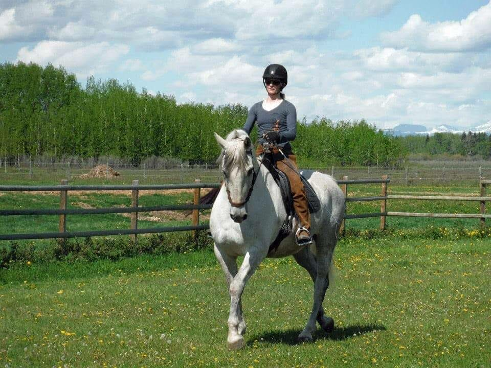 alberta horse training and development