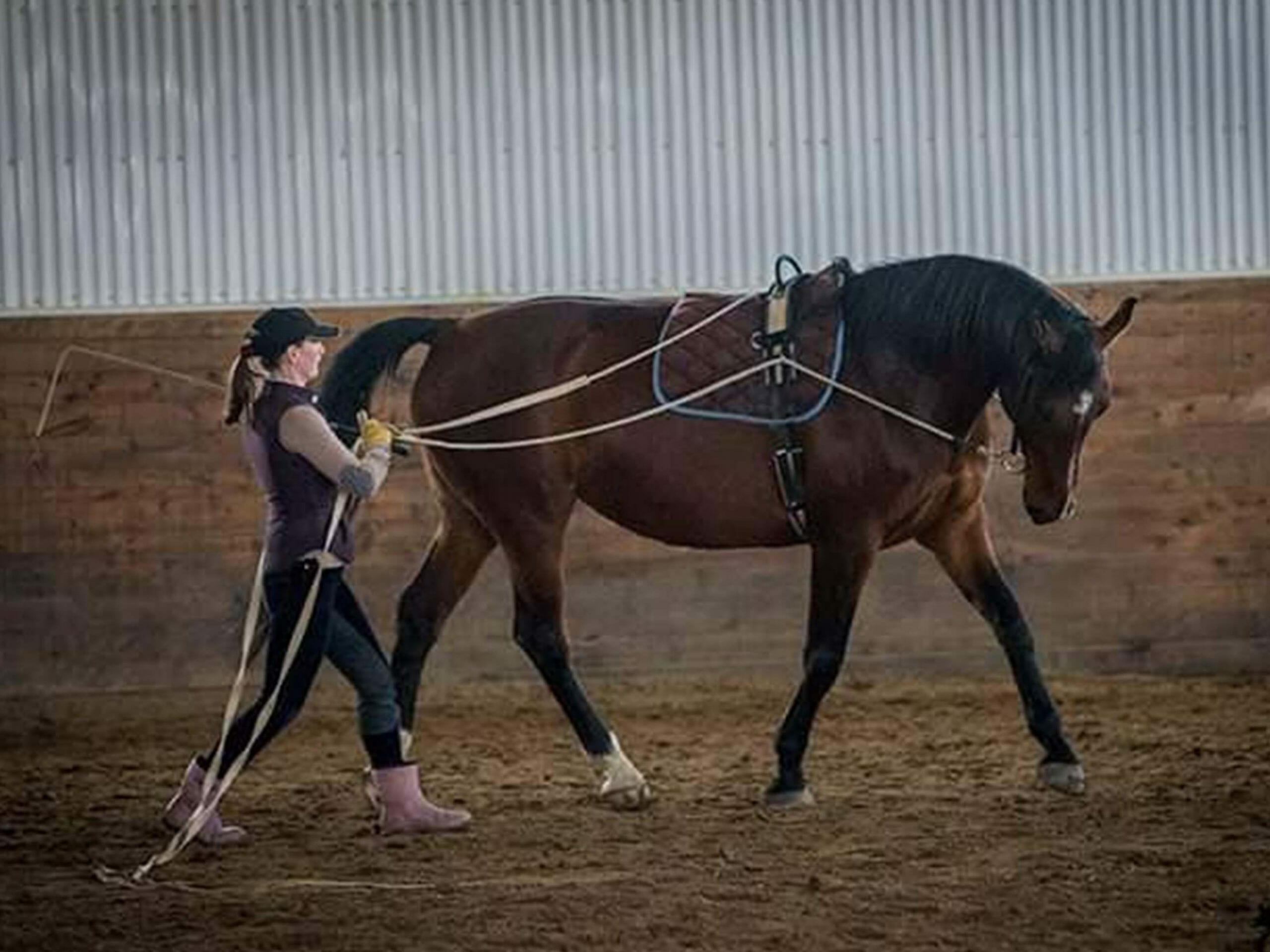 in hand horse training