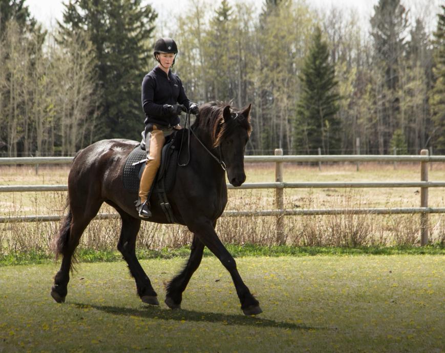 horse training alberta