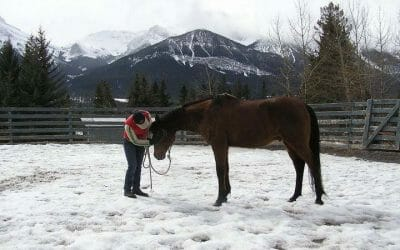 A Horse's Final Day