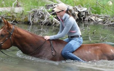 Life Lessons I Learned from Working with Horses: The Joy of Balance